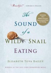 cover: the sound of a wild snail eating