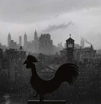 "Andre Kertesz, ""Rooster,"" 1963, Gelatin silver print, 15 x 16"" CPAC Collection,"