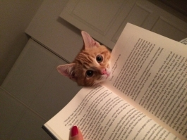 Picture of an orange kitten peeking over a book.