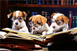 3 dogs reading a book