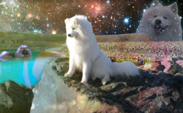 puppies in space: photoshop example