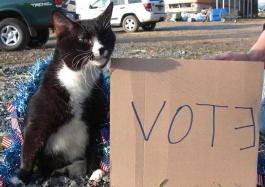 cat says vote