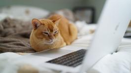 cat on bed staring at a cluttered laptop desktop screen.
