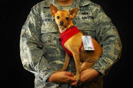 Service dog with soldier