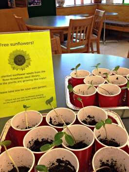 free sunflower babies