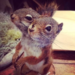 two-headed squirrel